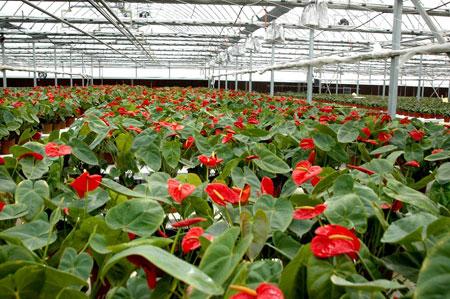花卉大棚供应花卉大棚供应商