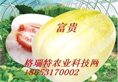 济南甜瓜种子