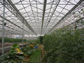 蔬菜高温大棚建造