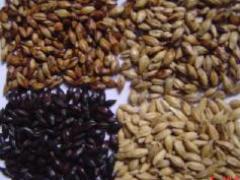 在哪有优惠的焦香麦芽供应 黑麦芽价格