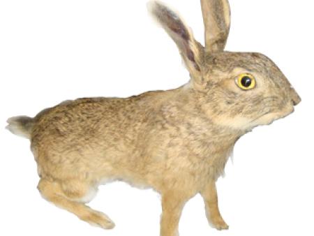 野兔伊人在线