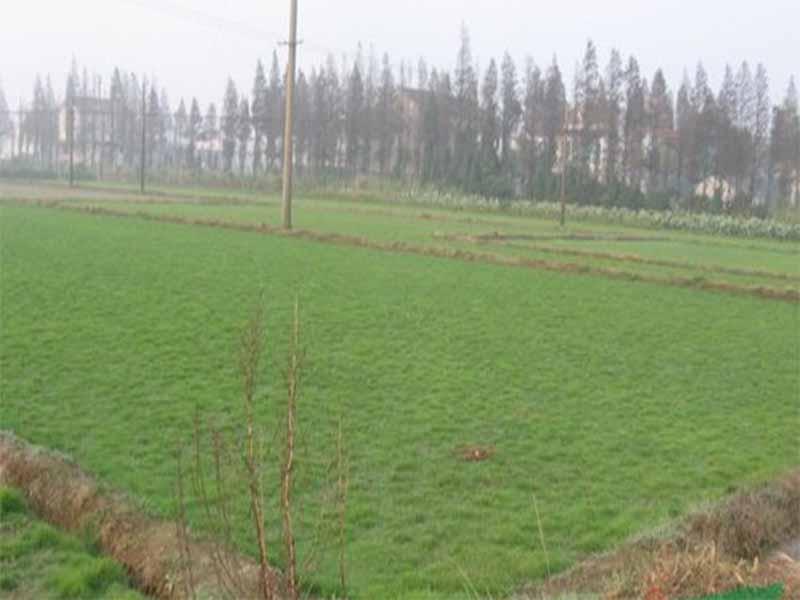 草坪种子批发|性价比高的防尘草种就在威廉希尔app下载威廉希尔william hill