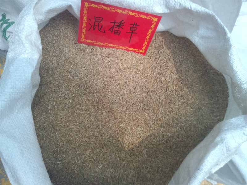 防尘护坡种子_河南专业的防尘草种生产基地