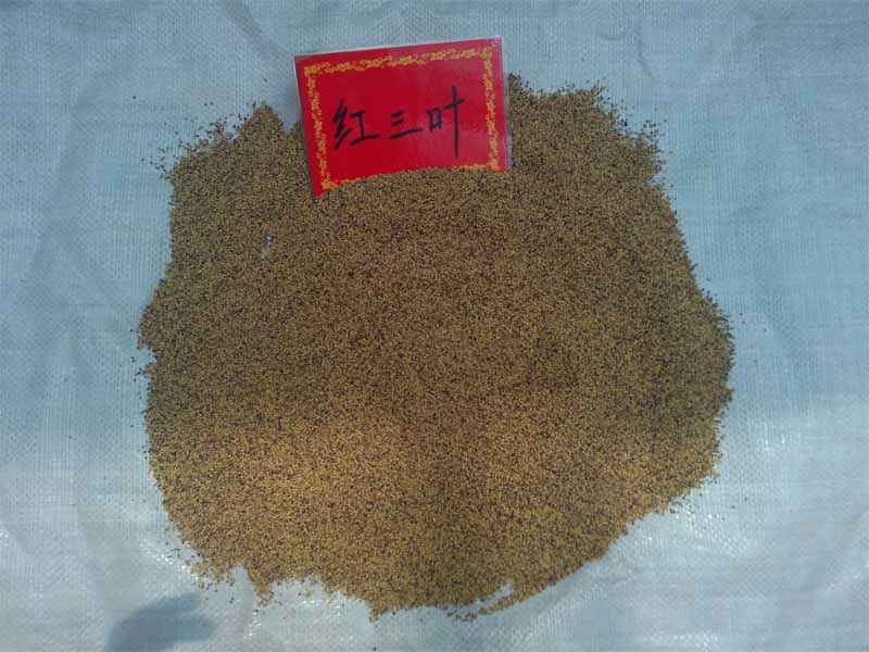 郑州草坪种子红三叶哪里有卖?郑州兴盛园林草坪种子专业批发