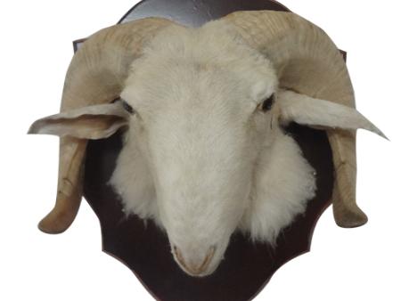羊头动物伊人在线