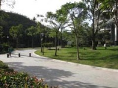 合格的道路绿化山东提供    ——济南道路绿化