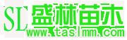 泰安盛林苗木开发中心