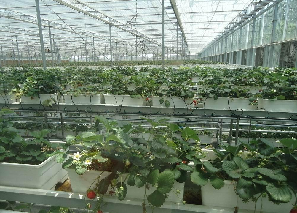 农业温室大棚建造-花卉温室建设-日光温室建设厂家