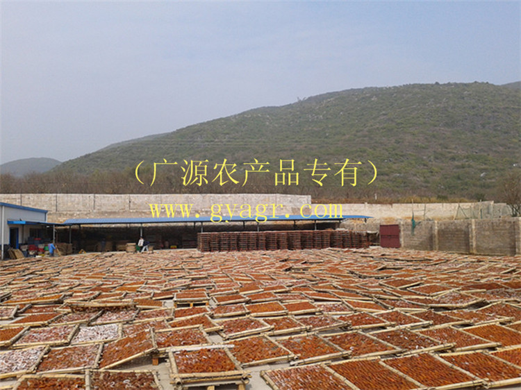 供應桂林優惠的桂林柿餅,價格實惠的柿餅