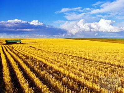 澳洲优质食用饲料燕麦供应商