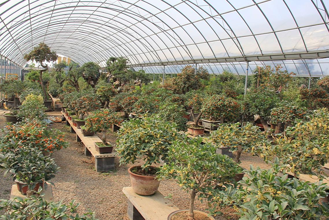 壁纸 成片种植 风景 植物 种植基地 桌面 1138_761