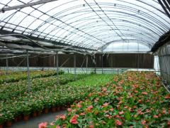 花卉温室建设包您满意_智能花卉温室建设