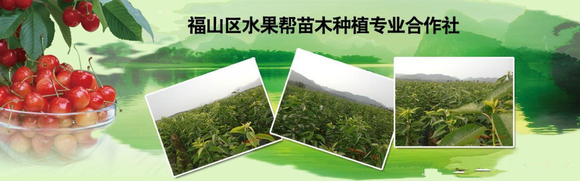 烟台香港赛马会官网备用苗批发|烟台香港赛马会官网备用苗供应