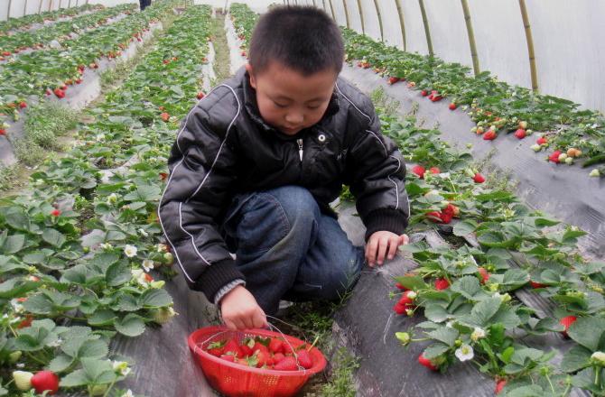 济南桃花岛生态农业旅游度假区电话-地址-网址