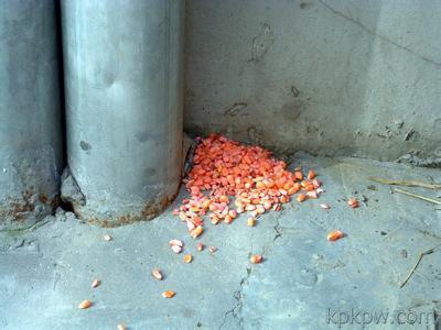 哪里有提供全面的云南灭鼠——低价云南灭蟑螂