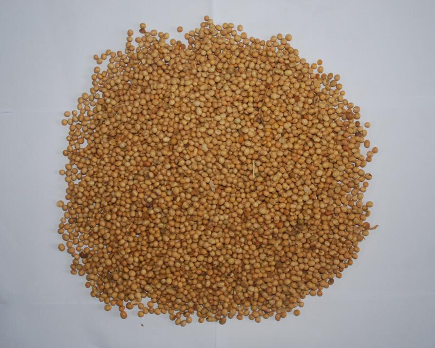 榨油专用黄豆供应