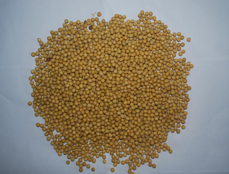 乌拉圭大豆价格
