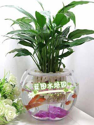 水生花技术培训费用如何 宣城水培花卉技术培训