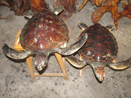 给河南濮阳海洋管加工制作的海龟伊人在线
