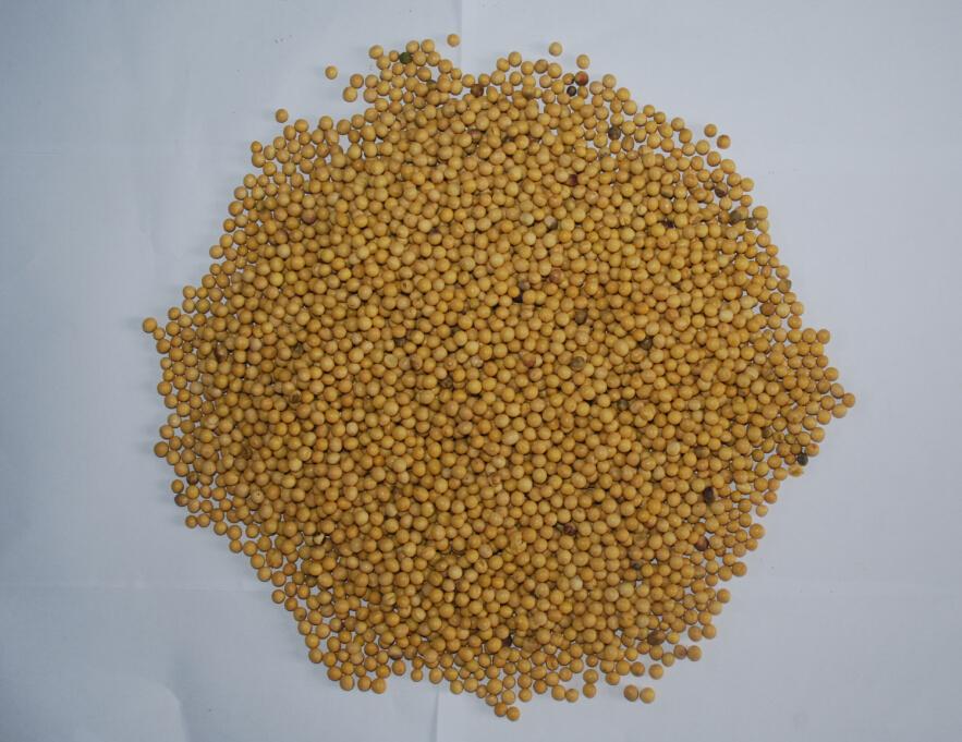 黑龙江海伦精选大豆