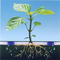 潍坊知名的滴灌带提供商,山东滴灌带