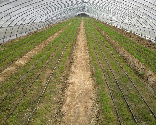 滴灌带厂家,物超所值蔬菜大棚滴灌带,哪里有卖
