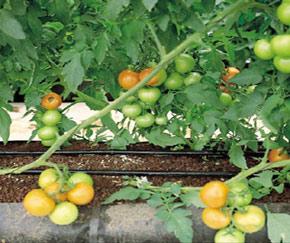 超优惠的滴灌带供应信息:滴灌带厂家