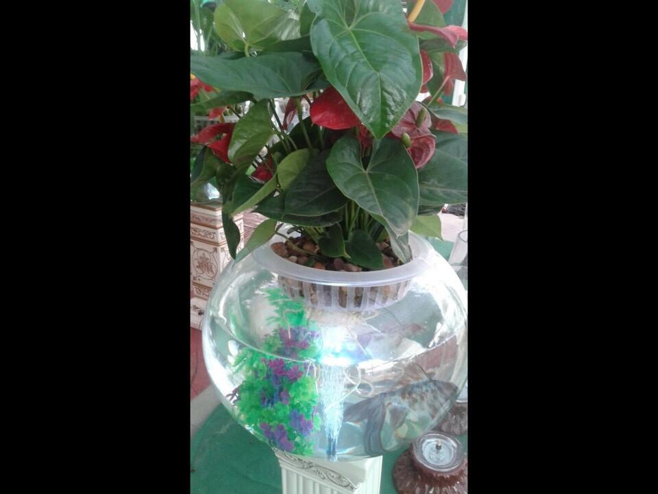 水培花卉加盟专业提供-通化水培花卉加盟