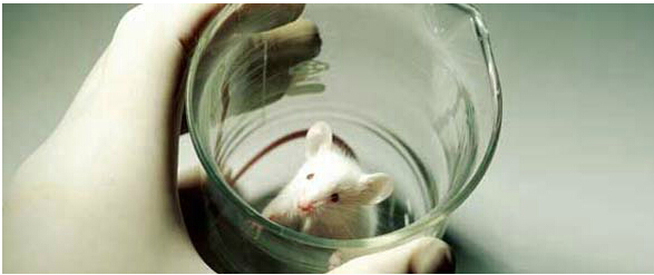 动物实验室仪器
