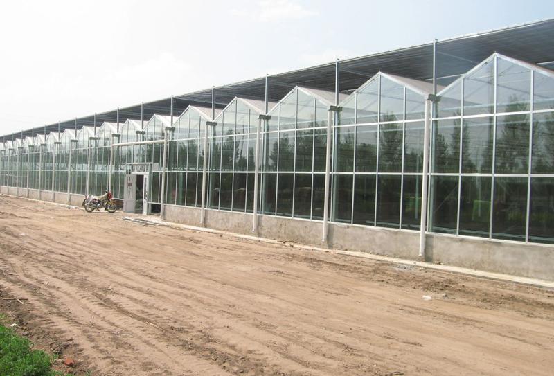 玻璃智能温室|玻璃板温室建造|玻璃连栋温室建设——选亿成