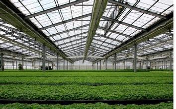 园艺温室建造建设_山东信誉好的园艺温室建造公司