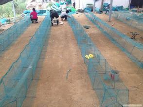 衡水厂家铭湾供应优质泥鳅防鸟网