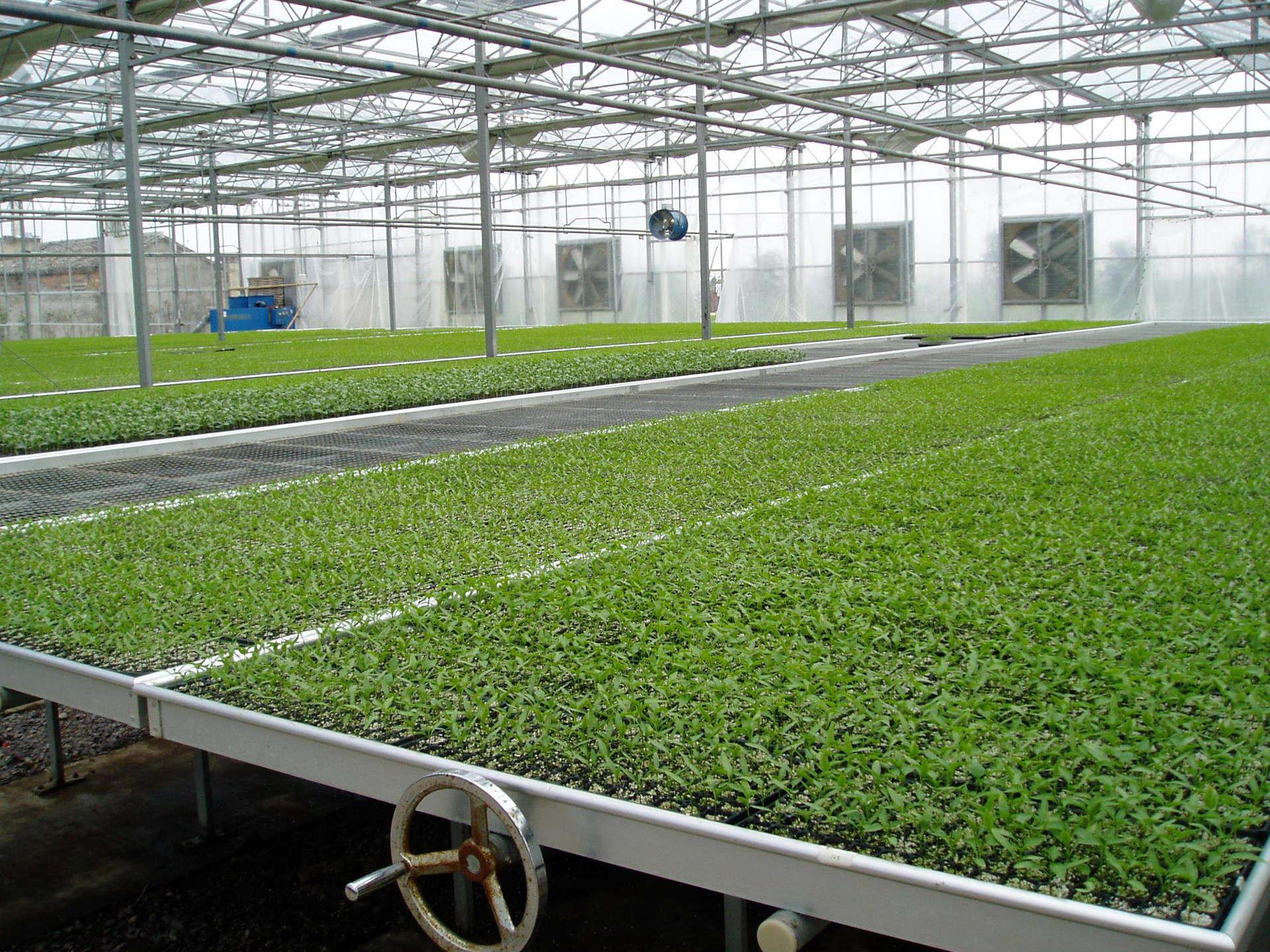 新型苗床温室建造-潍坊哪里有提供苗床温室建造