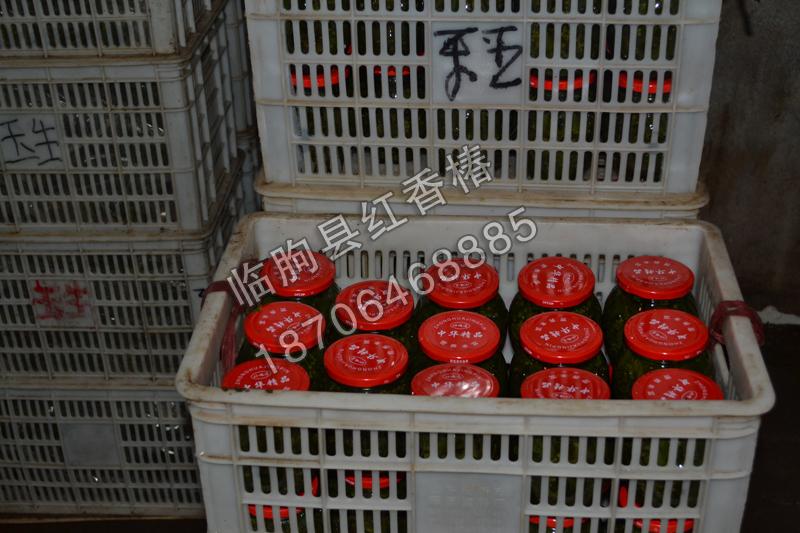批發鹽漬紅香椿|采購報價合理的鹽漬紅香椿就找俊豪紅香椿