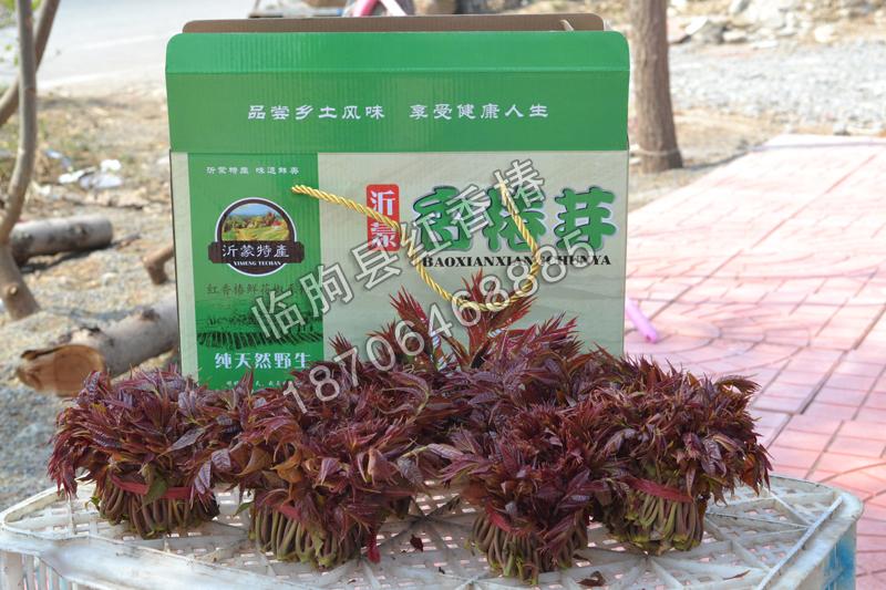 鲜香椿价位|信誉好的鲜香椿供应商