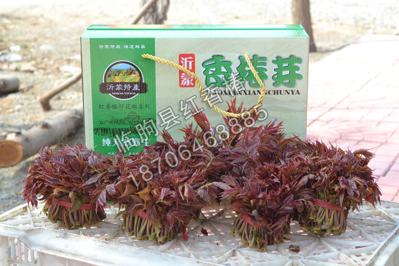 潍坊鲜香椿批发-划算的潍坊鲜香椿俊豪红香椿供应