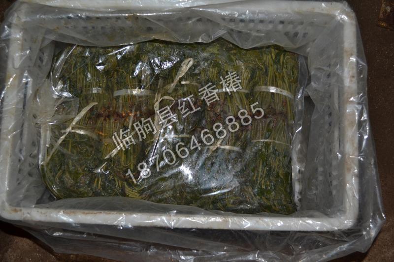 潍坊红香椿咸菜批发商-潍坊哪里有批发潍坊红香椿咸菜