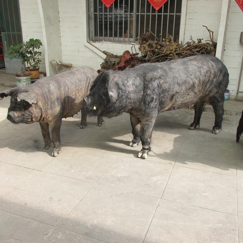 动物标本|图库展示-青州市纪元动物标本制作中心