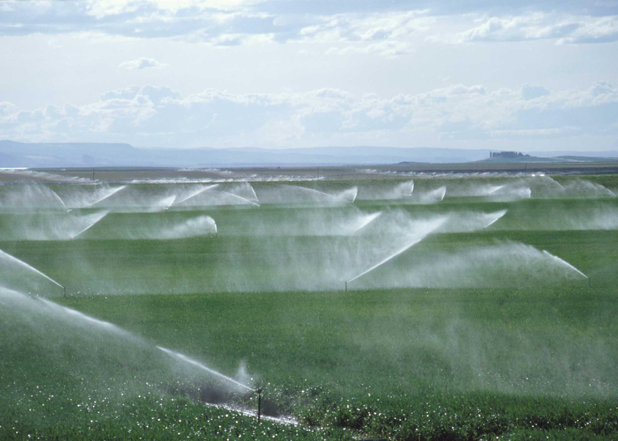 南宁园林喷灌|微喷  园林灌溉设备