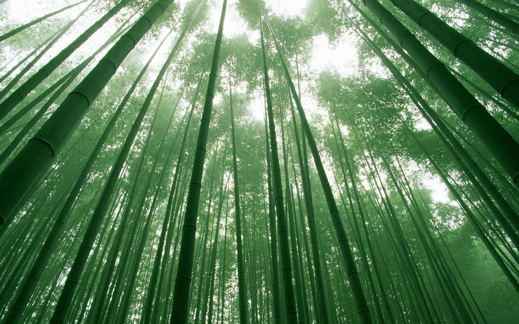 关于柳树和梅花的简笔画和竹子.