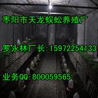 壁虎养殖哪里好?湖北枣阳天龙养殖厂15972254133