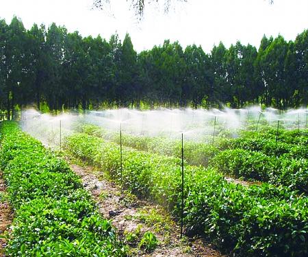 广西园林节水灌溉 园林微喷