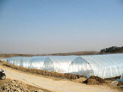 好的高温PVC大棚膜市场价格 高温PVC大棚膜厂家