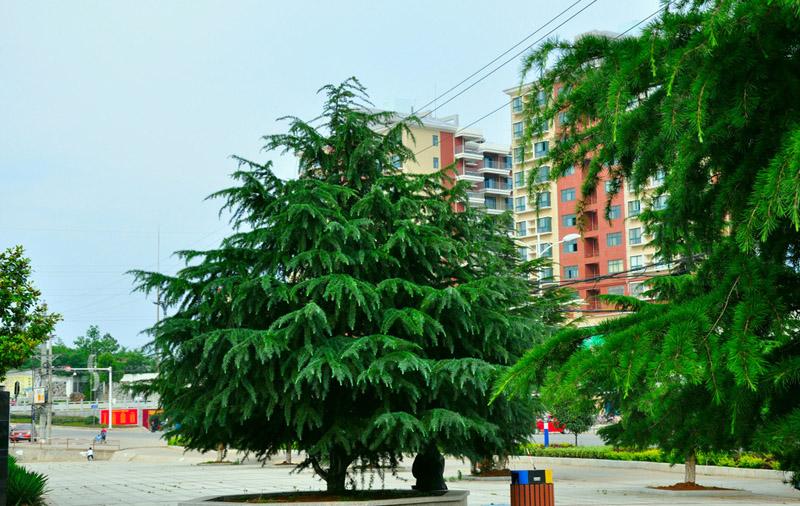 烟台园林绿化 烟台园林工程 烟台园林绿化工程
