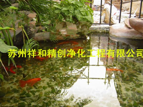 全国清除养鱼池中的青苔方法 水发绿的主要原因不是细菌而是藻类,水质污染后水质情况复杂,花园鱼池的污染来源于有机物的氧化代谢物,水里的磷酸盐及含氮废物的增高给藻类大规模繁殖提供了充足营养使藻类爆发。解决办法除了换水外可以减少饵料的投放,特别是在气温高的时候,有条件的要加潜水泵加快有机质的降解速度,在水池中加喷淋或假山瀑布,给硝化细菌提供工作场所,使硝化细菌把有毒的亚硝酸盐分解成低毒的硝酸盐。祥和精创生态基感官上达到,水清、水无异味,长期维持水体良好的景观效果,抑制水体的富营养化,防止藻华发生。 锦鲤鱼池生物