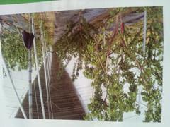 樱桃棚建设厂家——和顺温室