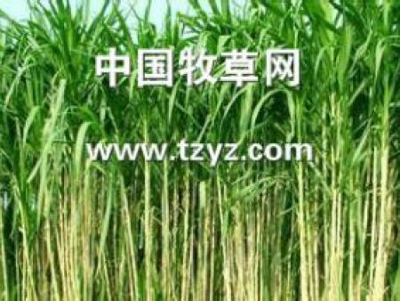 选择高产牧草品种应根据什么要求?