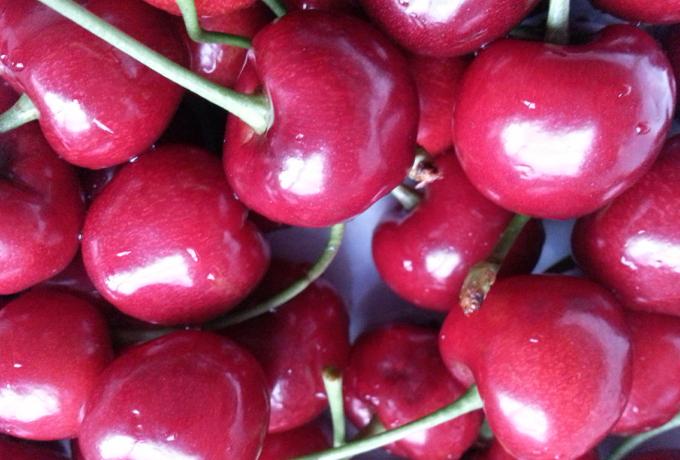 吉塞拉樱桃苗哪里有卖的 北京吉塞拉樱桃树苗苗