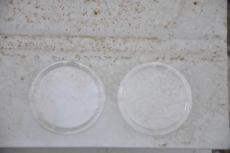 山东塑料盖供应、潍坊塑料盖批发、保鲜碗盖大量供应