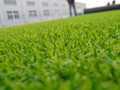 【烟台人造草坪】烟台人造草坪批发 烟台人造草坪厂家